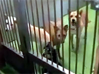 動物愛護センターの収容施設